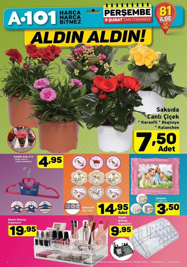 A101 9 Şubat 2017 Perşembe Katalogu - Saksıda Canlı Çiçek